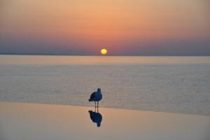 Dawn at Black Sea Coast