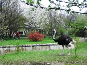 Zoo in Sofia