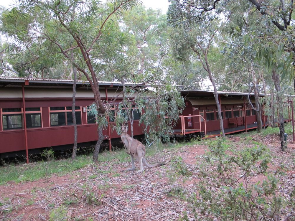 Rail Carriage Accomodation at Undara