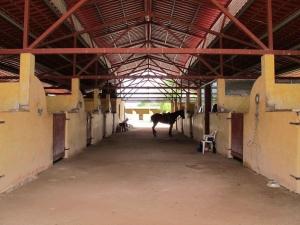 Yucatan Polo Club