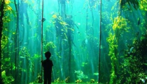 Two Oceans Aquarium Shop