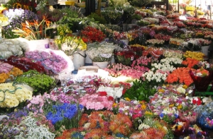 Adderley Street Flower Sellers Market