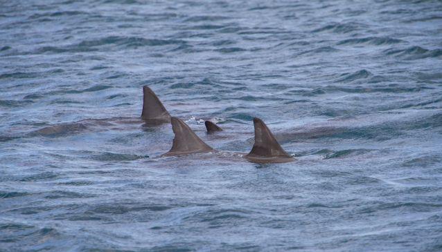 Shark Spotting