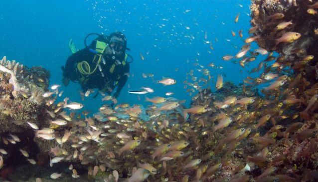 Snorkelling/Diving