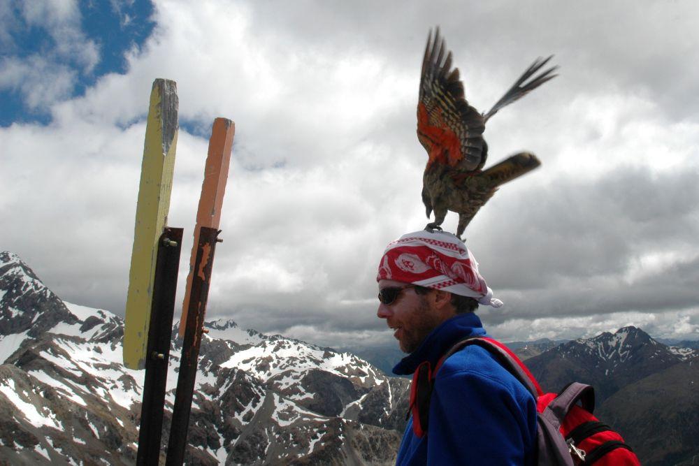 Avalanche Peak Track