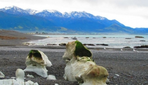 The Charm of Kaikoura