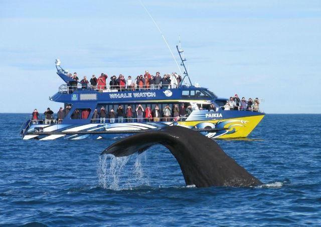 Credit: Whale Watch Kaikoura