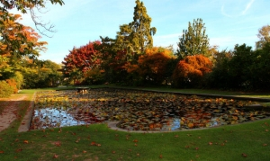 Lily Pond, Mona Vale, Christchurch
