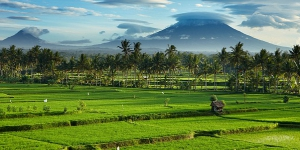 Central Bali South - The Plains
