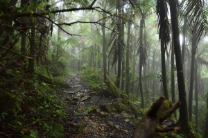 El Yunque Rainforest of Puerto Rico