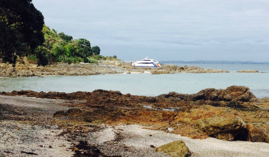 A Day Trip To Tiritiri Matangi Island