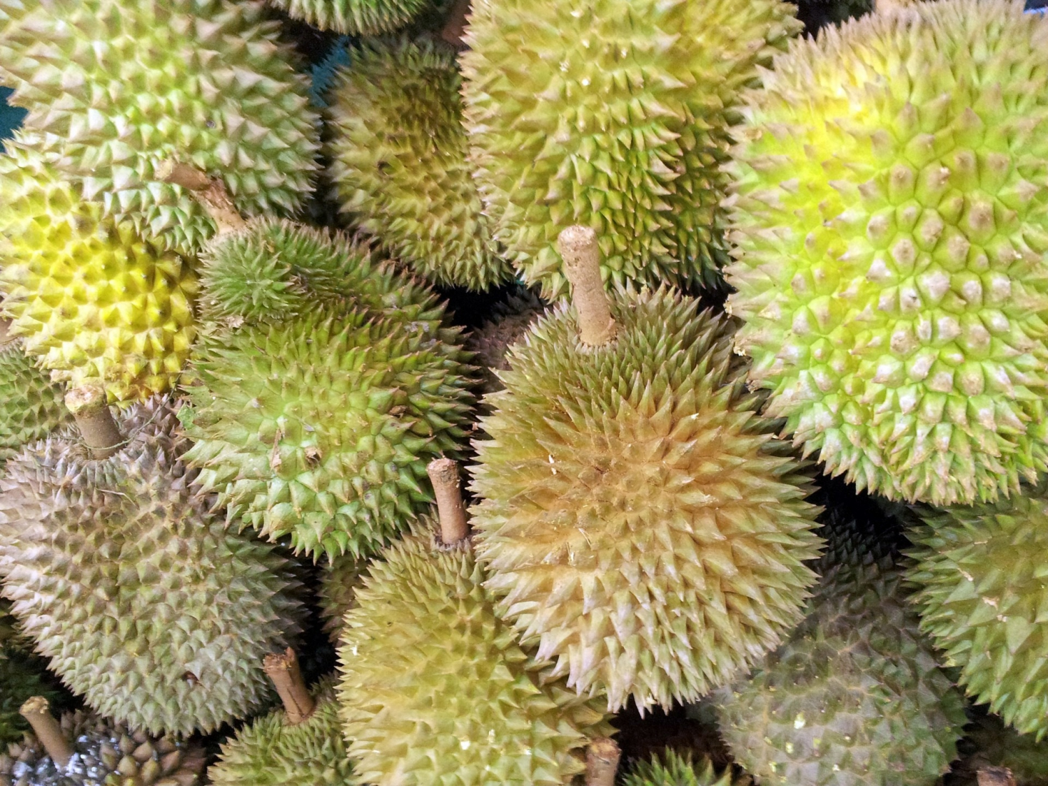 Durian is called King of Fruits