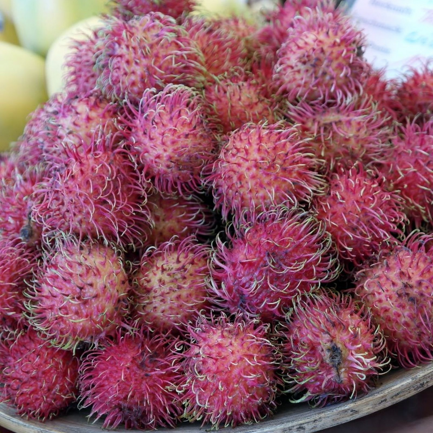 The rambutan is a spikky, red fruit, about the size of a golf ball