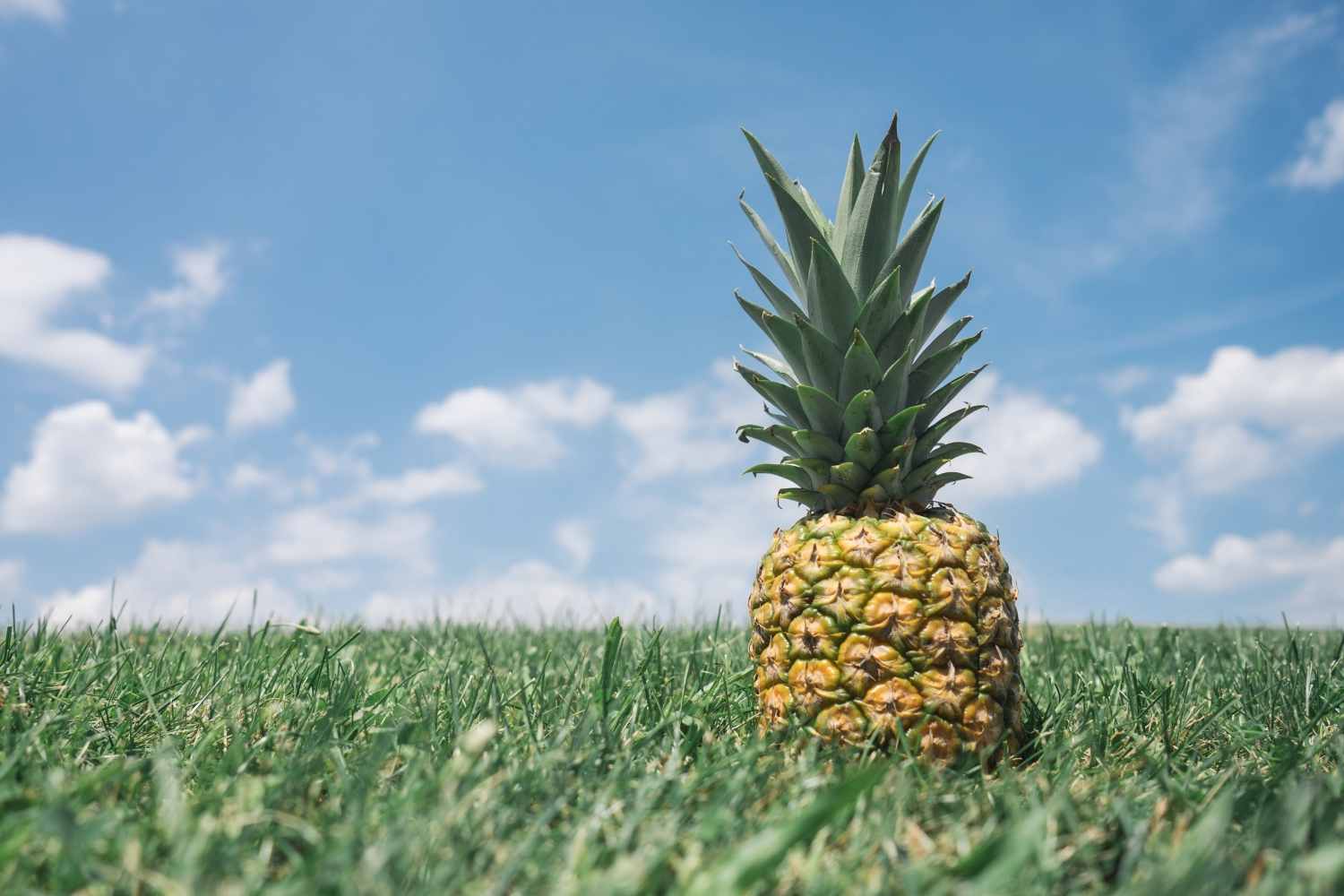 Another basic fruit: Pineapple