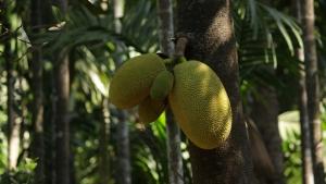 A Virtual Market Stroll: Exotic Fruits in Vietnam