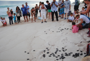 A hatchling release by The Barbados Sea Turtle Project