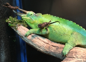 Meet the new arrivals at Terra Natura Benidorm