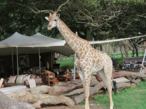 MY TOP TEN PRIVATE GAME PARKS