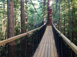 The Rotorua Redwoods Treewalk