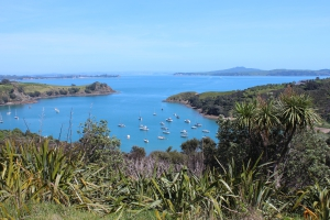 Top 5 Auckland Islands