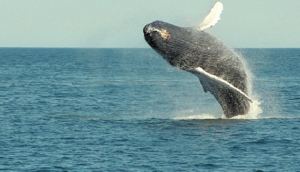 A Whale of a Time in Costa Rica