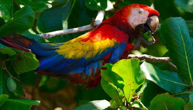 Flying Free in Costa Ballena, Costa Rica