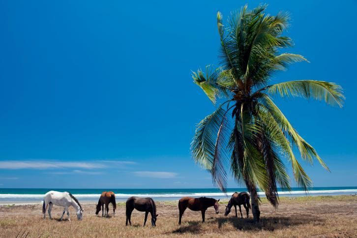 Recover by the Costa Rican shore