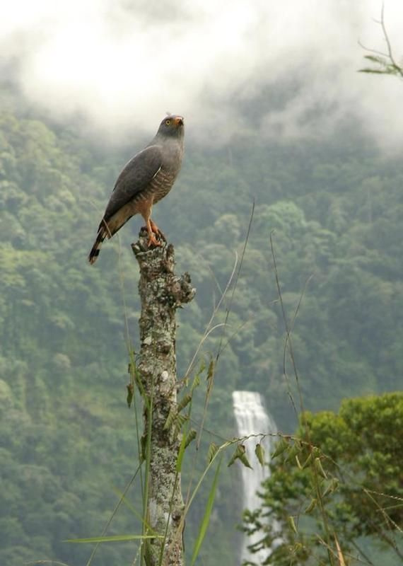 Costa Rican wildlife