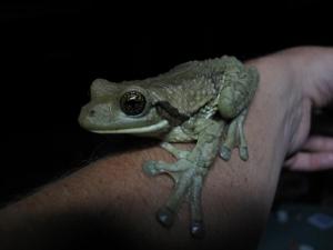 tree-frog-arm