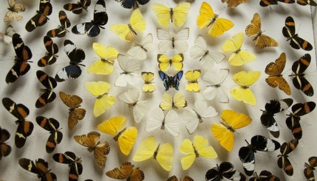 University of Costa Rica Insect Museum