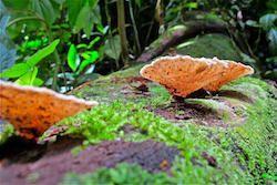 Ecosystems in Costa Rica