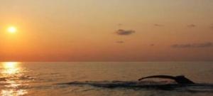 Land of Whales - Uvita