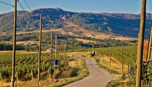 The International Wine Tourism Conference