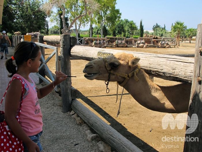 Camel park, photo copyright My Guide Cyprus