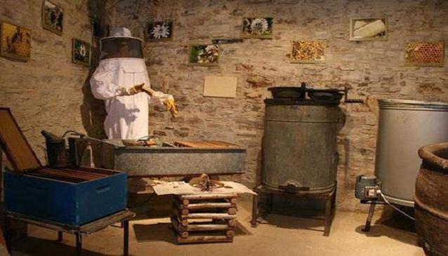 Escape Room Museum Of Nature
