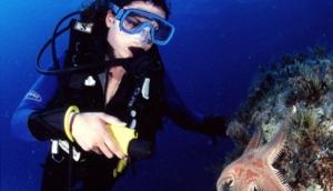 Sunfish Divers - PADI Courses
