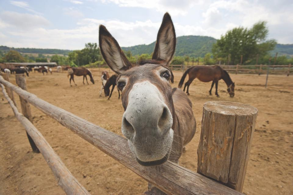 Sundays at Golden Donkeys Farm
