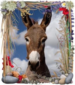May Day Donkeys