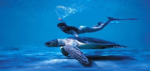 Save Caretta Caretta turtle