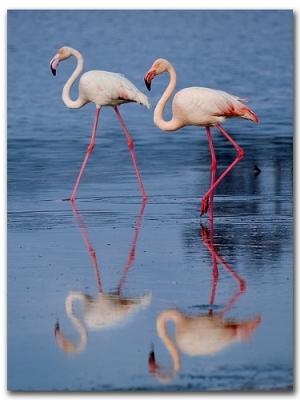 Flamingos, Larnaka, photo by Michael Khoury Flickr