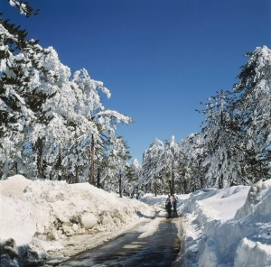 Troodos Mountains, photo by PIO, Cyprus.