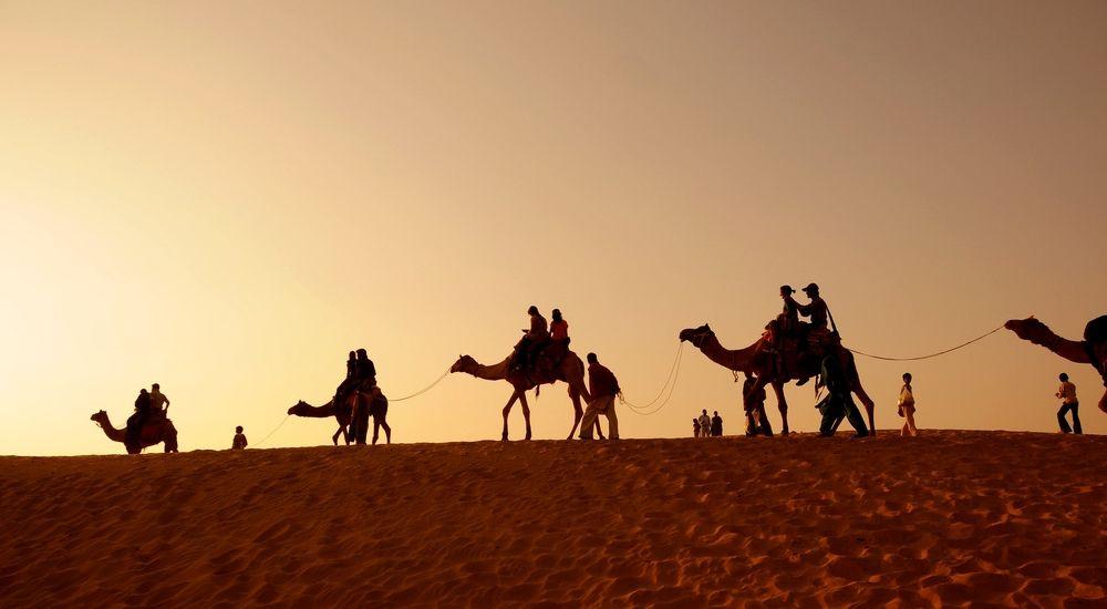 Camels trekking across a dune