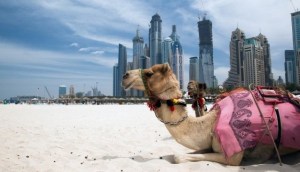 Dubai's Top 5 Desert Distractions