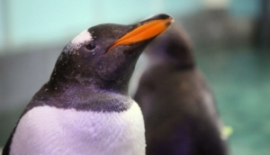 Meet the penguins at Mall of the Emirates