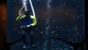 Check out the marine life & swim with the fish
