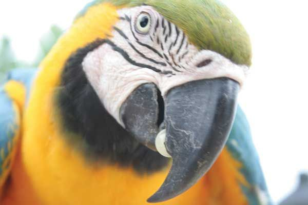 Parrot (credit: Ministry of Tourism Ecuador)