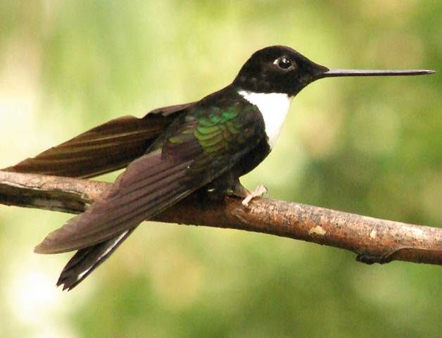 Hummingbird (credit: Ministry of Tourism Ecuador)