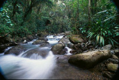 Cloud Forest (Credit: Quito Turismo)