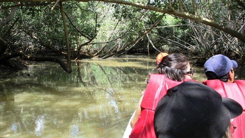 Mangroves - Isla Corazón