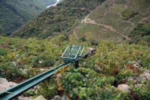 Setting of Vineyards